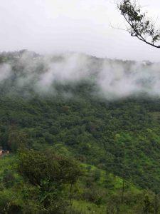 cloud in greenery